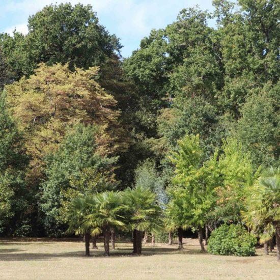 Photos du parc du château de La Baronnière : la palmeraie (XXe siècle)