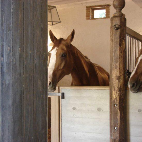 Photos du château de La Baronnière : les chevaux dans l'écurie