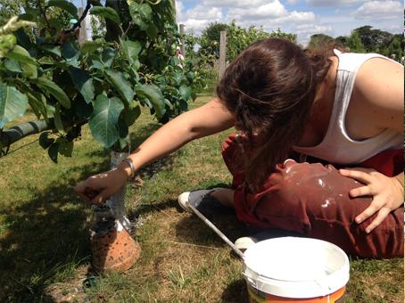 Au travail pendant les Rendez-vous au jardin 2017 à La Baronnière