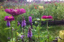 Découvrez les photos du jardin potager du château de La Baronnière, dans le Maine-et-Loire.