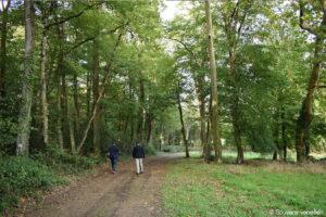 Guerre de Vendée : la traversée du parc de La Baronnière