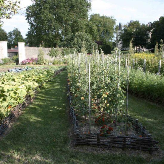 Photos du jardin potager de La Baronnière : 25 pieds de tomates de collection