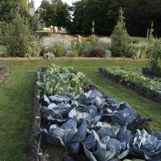 Photos du jardin potager de La Baronnière : choux cabus