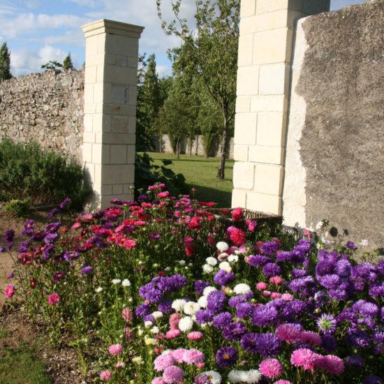 Photos du jardin potager de La Baronnière : cléomes blancs, euphorbes panachées et reines-marguerites violette, bleues et roses
