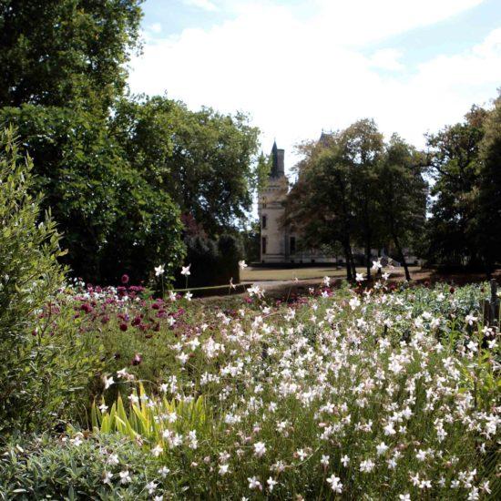 Photos du jardin potager de La Baronnière : gauras blanches