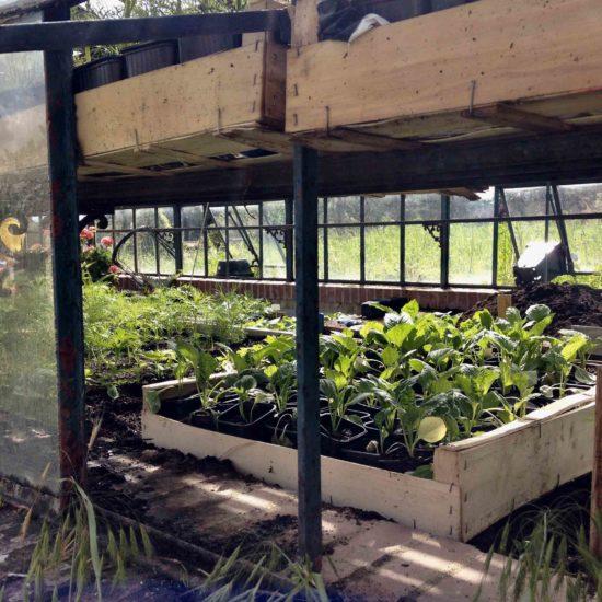 Photos du jardin potager du château de La Baronnière : petits plants dans la nurserie de la serre XIXème