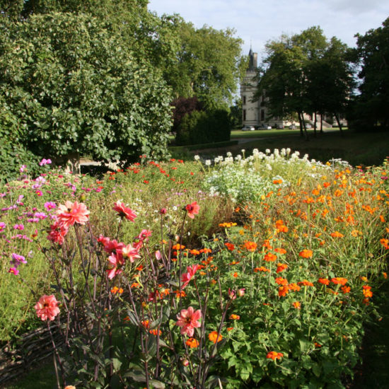 Photos du jardin potager de La Baronnière : zinnias multicolores et cosmos