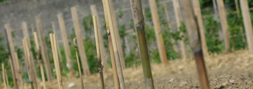 Travaux dans le jardin potager du château de La Baronnière