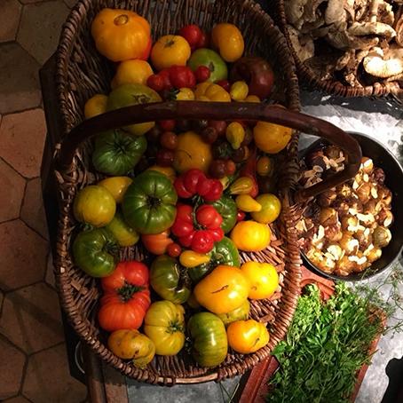 La récolte d'automne des tomates à La Baronnière