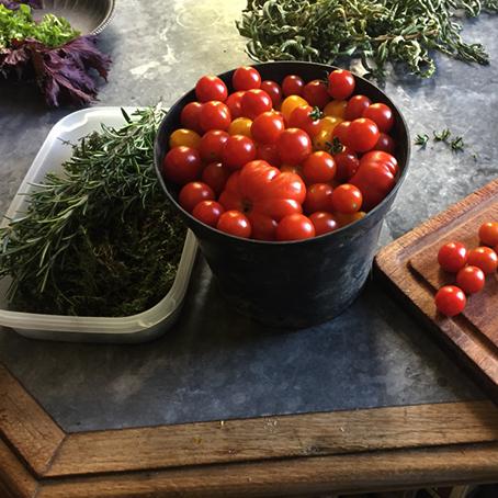 Tomates cerises à La Baronnière