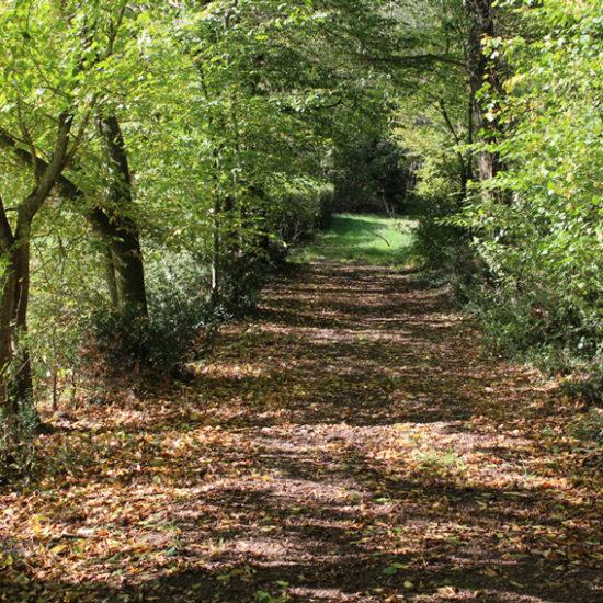 Un chemin du parc de La Baronnière