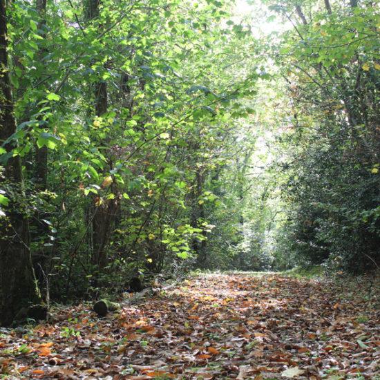Dans le bois du château de La Baronnière, dans le Maine-et-Loire